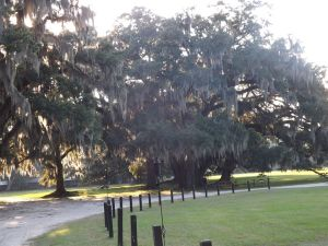 Middleton Place - Summerville SC