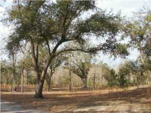 Vacant Land in Summerville